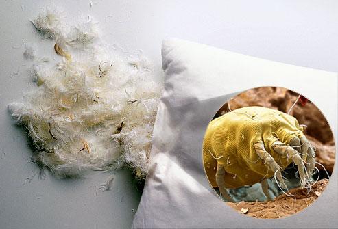 Аллергия на клеща домашней пыли. Истинная сенсибилизация к мажорным аллергенам клеща