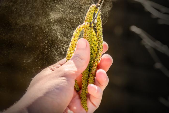 Аллергия на пыльцу деревьев и трав. Перекрестно-реактивная пищевая аллергия.
